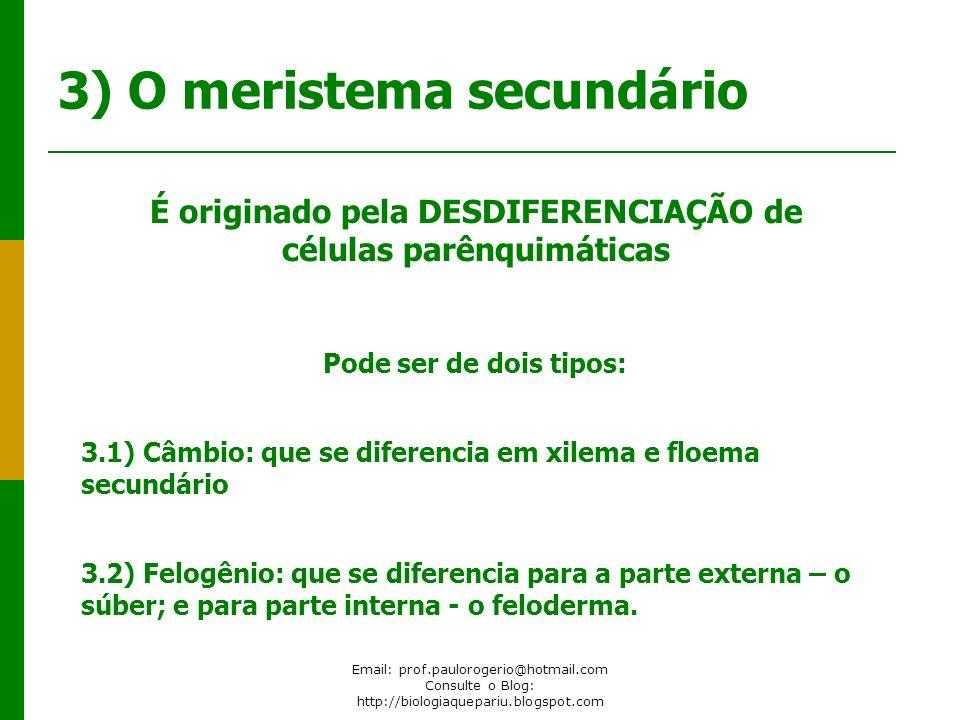 Email: prof.paulorogerio@hotmail.com Consulte o Blog: http://biologiaquepariu.blogspot.com 3) O meristema secundário É originado pela DESDIFERENCIAÇÃO