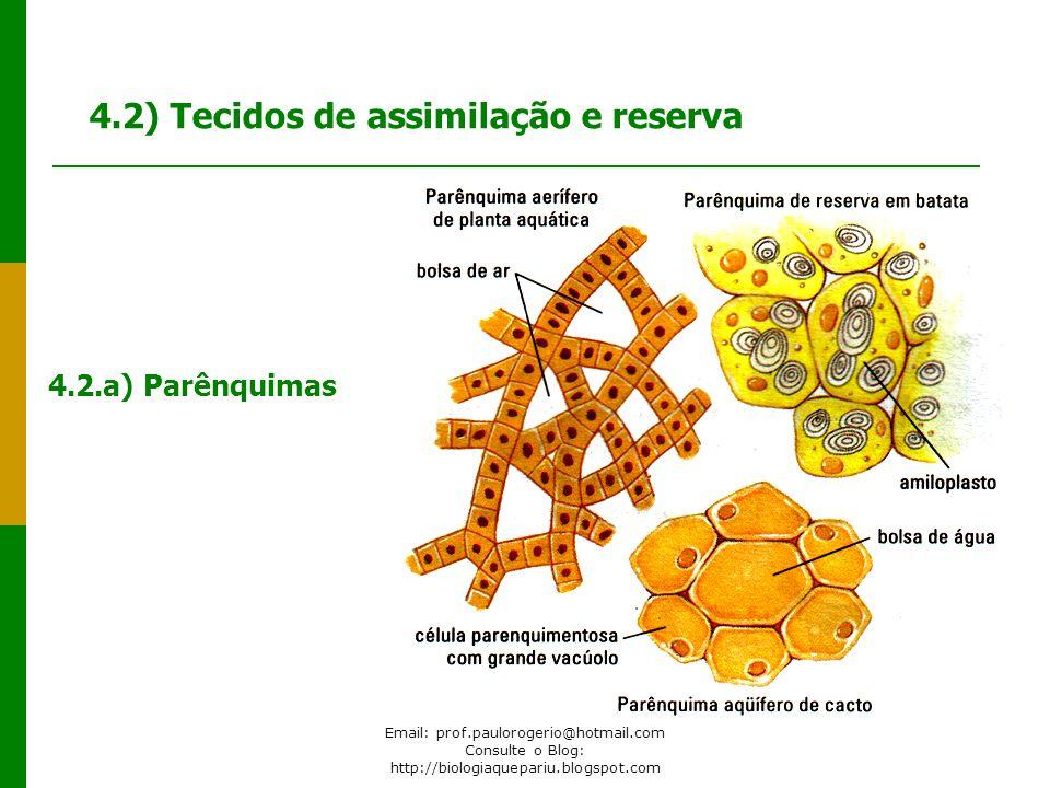 4.2) Tecidos de assimilação e reserva 4.2.a) Parênquimas