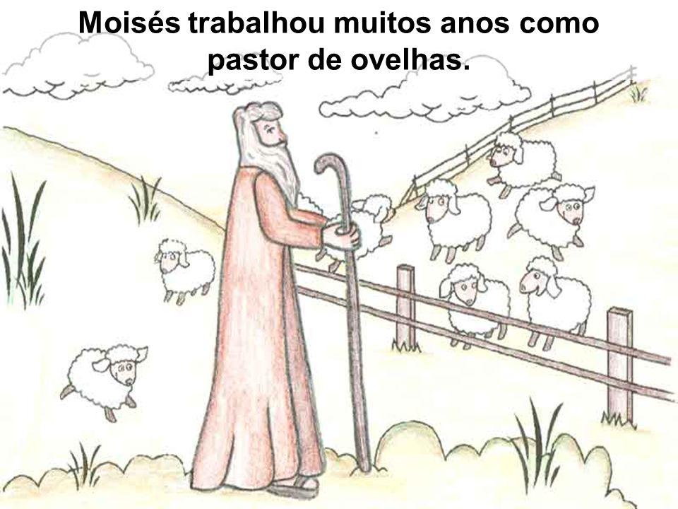 Moisés trabalhou muitos anos como pastor de ovelhas.