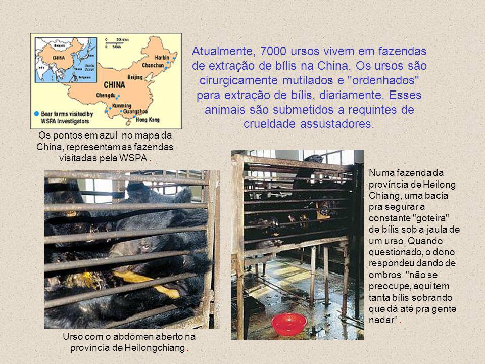 URSOS NA CHINA Com relação aos animais, quase todas as pessoas são nazistas. Para os animais é um eterno campo de concentração de Treblinka. Isaac Bas
