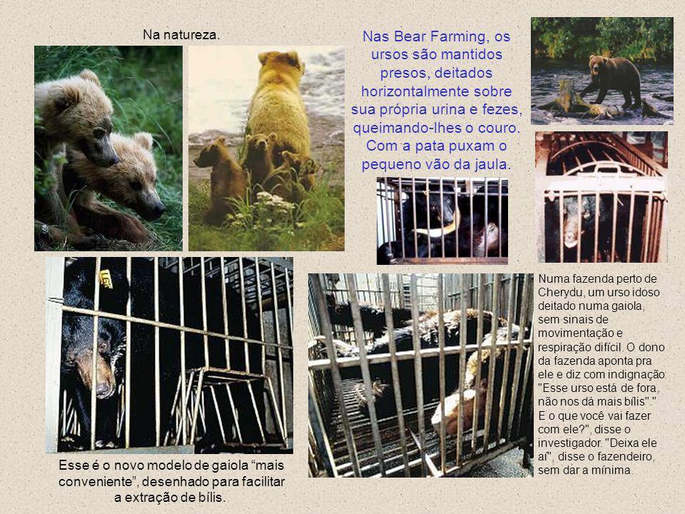 Ferida em carne viva causada pelas barras da gaiola. Esse urso vive numa fazenda onde afirmam ter um técnico em veterinária. Um tubo foi insertado no