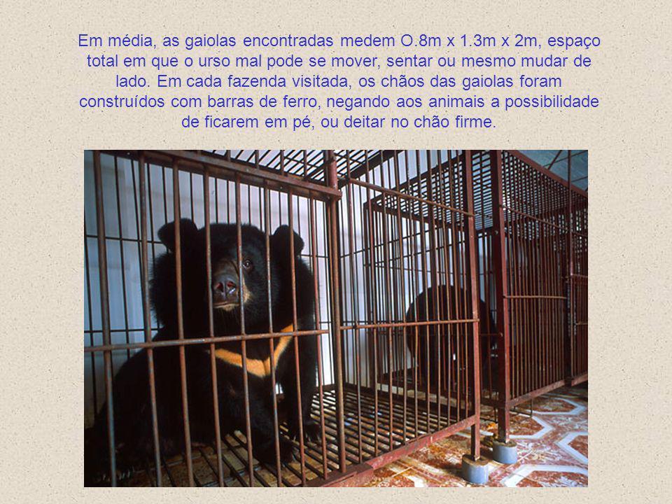 VIVENDO ESPREMIDOS NUMA GAIOLA Em Novembro de 1999 e Fevereiro de 2000, investigadores da WSPA visitaram um total de 10 fazendas de ursos em 6 provínc