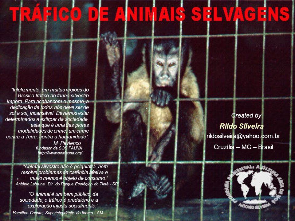 Hamilton Casara, Superintendente do Ibama - AM O animal é um bem público, da sociedade, o tráfico é predatório e a exploração injusta socialmente.