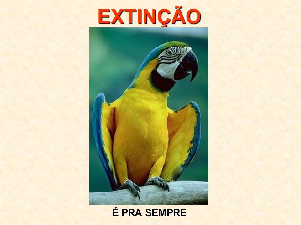 Este, e outros slides, você encontra nos sites www.abcanimal.org.br www.floraisecia.com.br www.petfeliz.com.br http://danielcaixao.multiply.com Artigo