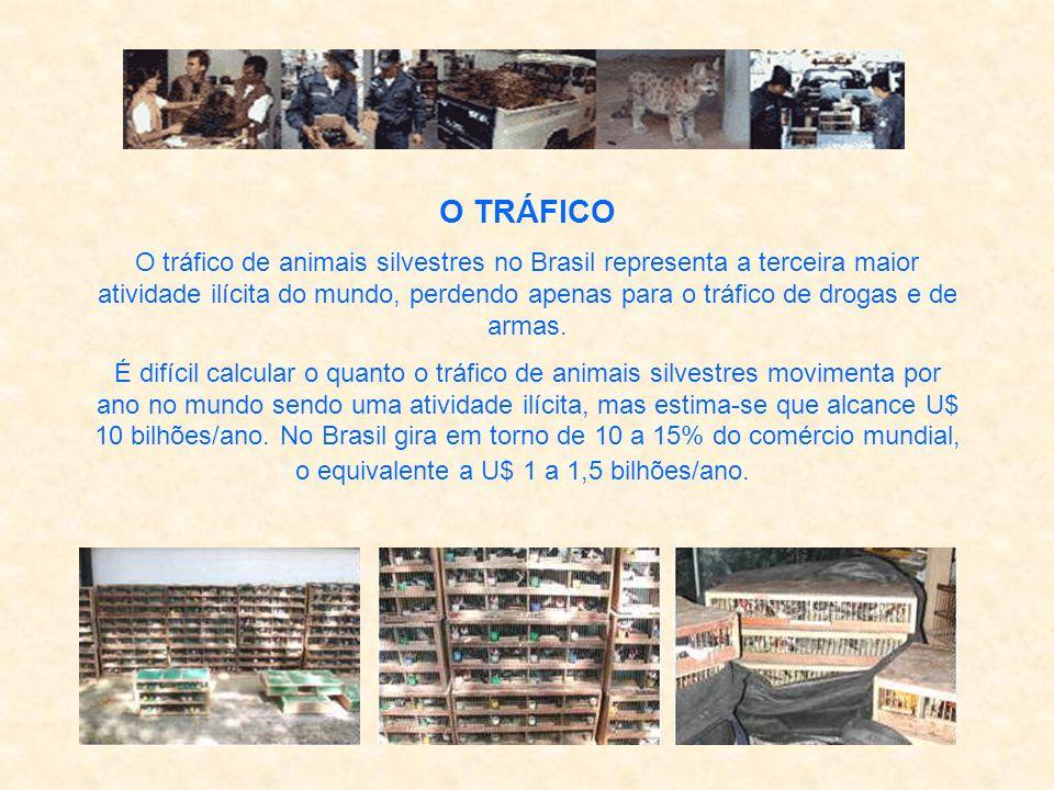 O TRÁFICO O tráfico de animais silvestres no Brasil representa a terceira maior atividade ilícita do mundo, perdendo apenas para o tráfico de drogas e de armas.