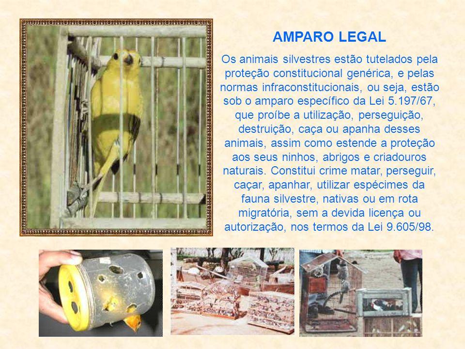 CONCEITO DE FAUNA SILVESTRE Nos termos da Lei 5.197/67, entende-se por fauna silvestre: os animais de quaisquer espécies, em qualquer fase do seu dese