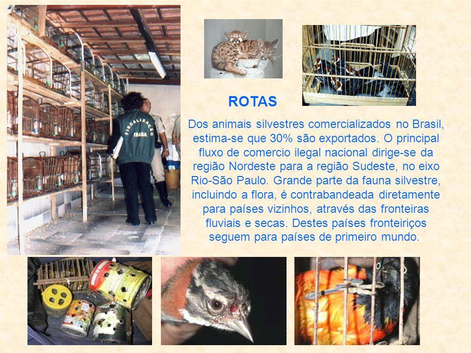 ROTAS Dos animais silvestres comercializados no Brasil, estima-se que 30% são exportados.