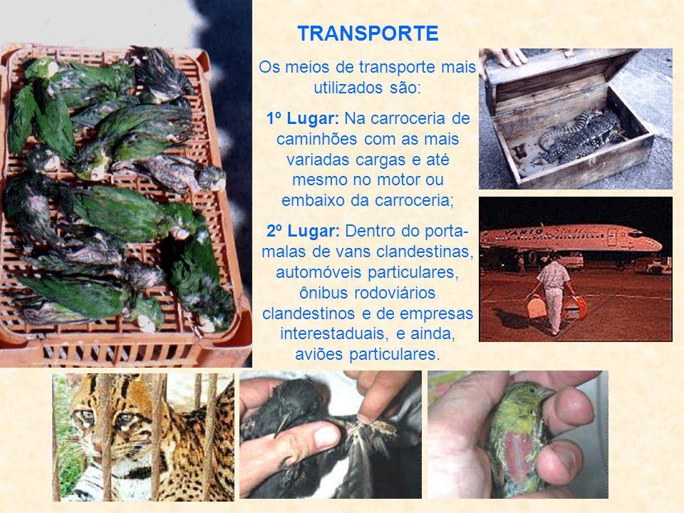 ROTAS Dos animais silvestres comercializados no Brasil, estima-se que 30% são exportados. O principal fluxo de comercio ilegal nacional dirige-se da r