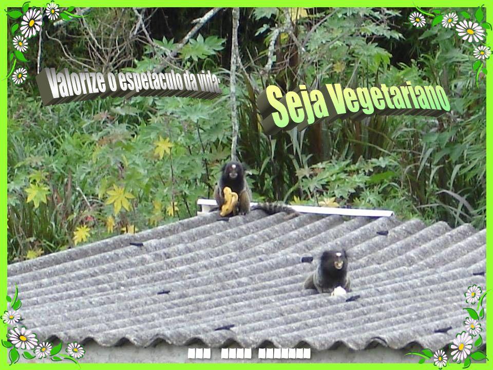 V I S I T E www.abcanimal.org.br www.floraisecia.com.br www.greepet.vet.br www.territorioselvagem.org.br www.petfeliz.com.br www.direitoanimal.org www