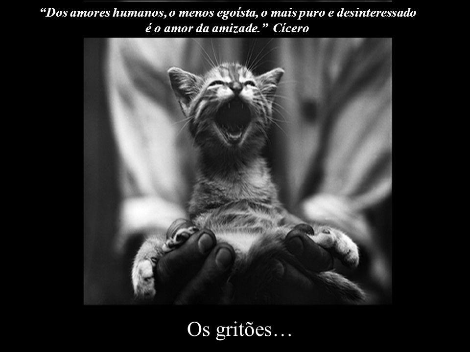 Os que sempre tem uma notícia ou uma novidade para contar… O verdadeiro amigo não é aquele que enxuga uma lágrima... e sim aquele que não a deixa cair