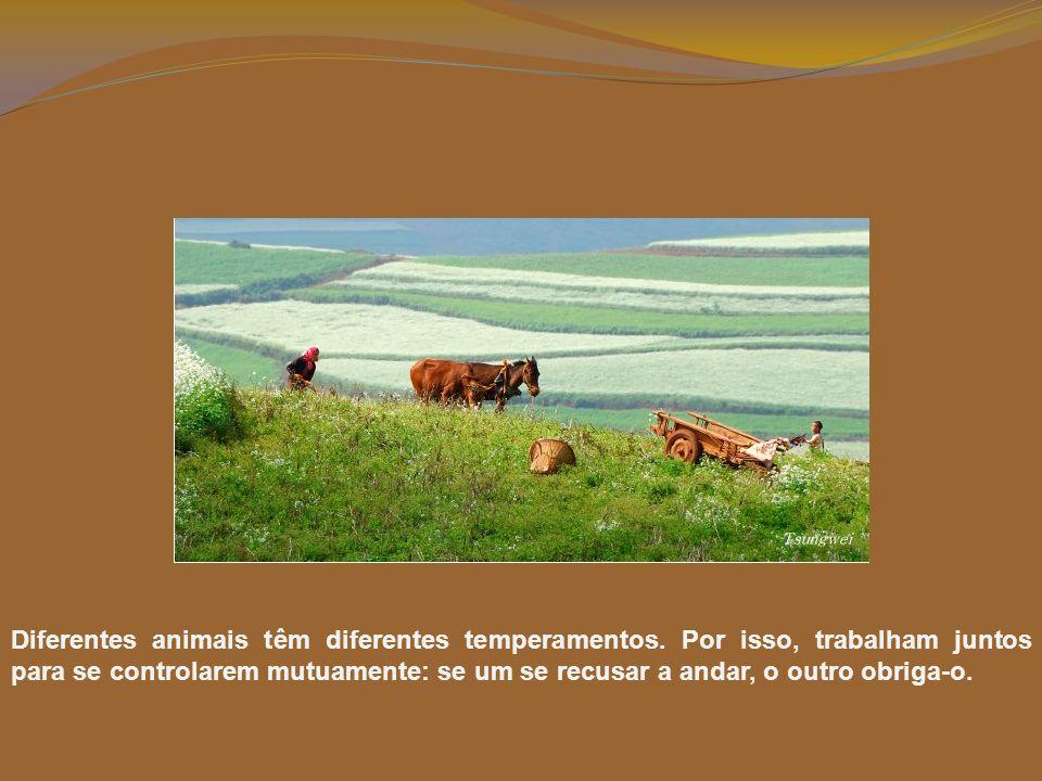 Diferentes animais têm diferentes temperamentos.
