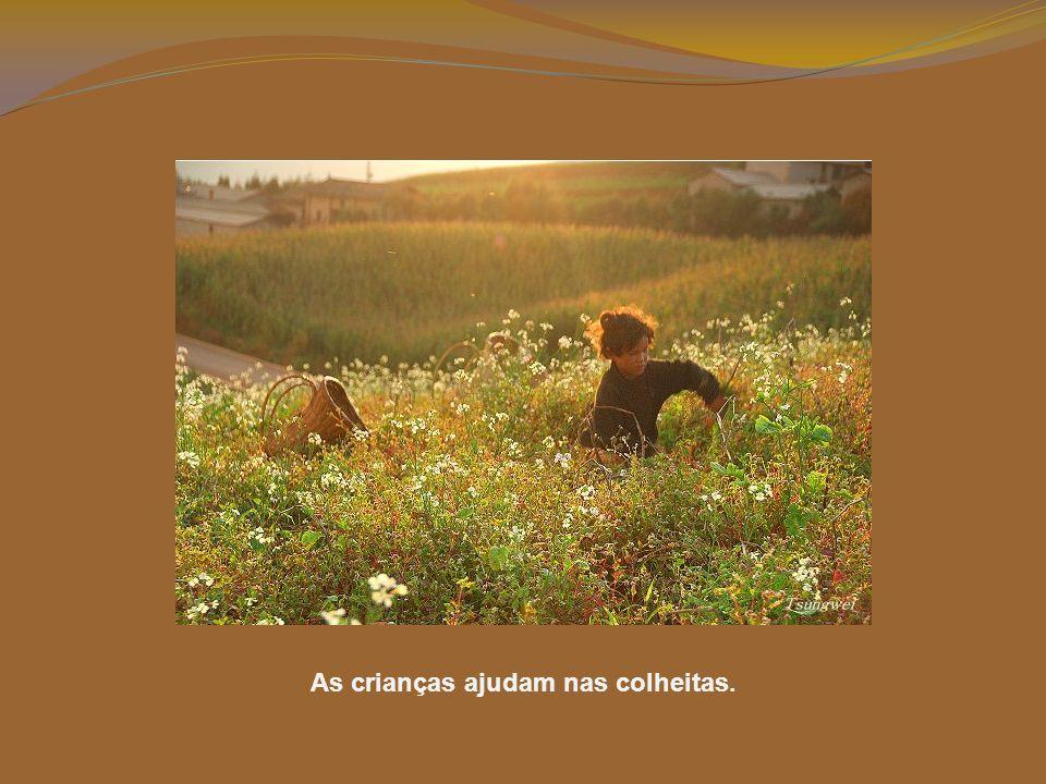 Diferentes animais têm diferentes temperamentos. Por isso, trabalham juntos para se controlarem mutuamente: se um se recusar a andar, o outro obriga-o
