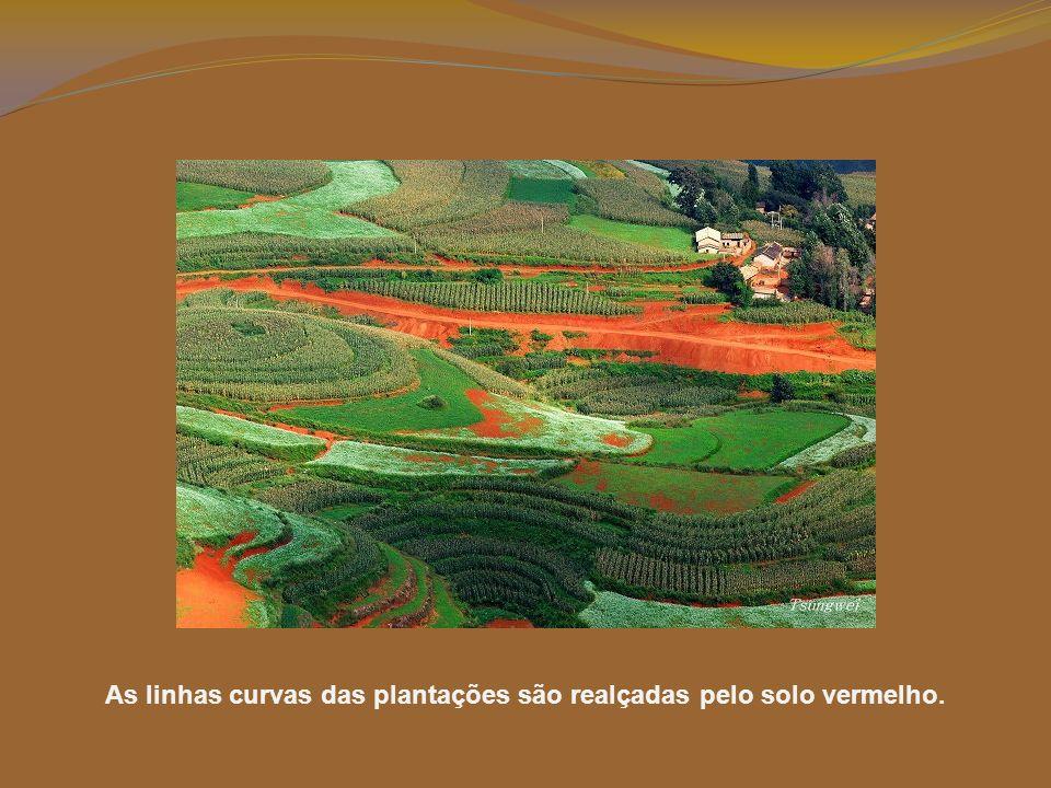 Lexiaguo está cheia de campos cultivados. As suas curvas e linhas embelezam a paisagem.