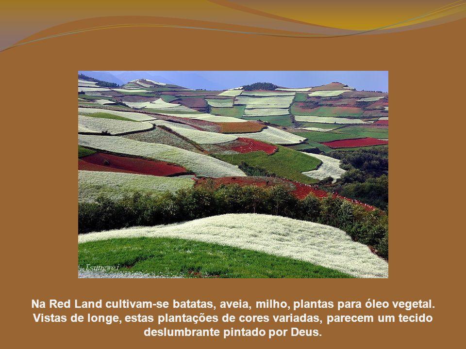 Na Red Land cultivam-se batatas, aveia, milho, plantas para óleo vegetal.