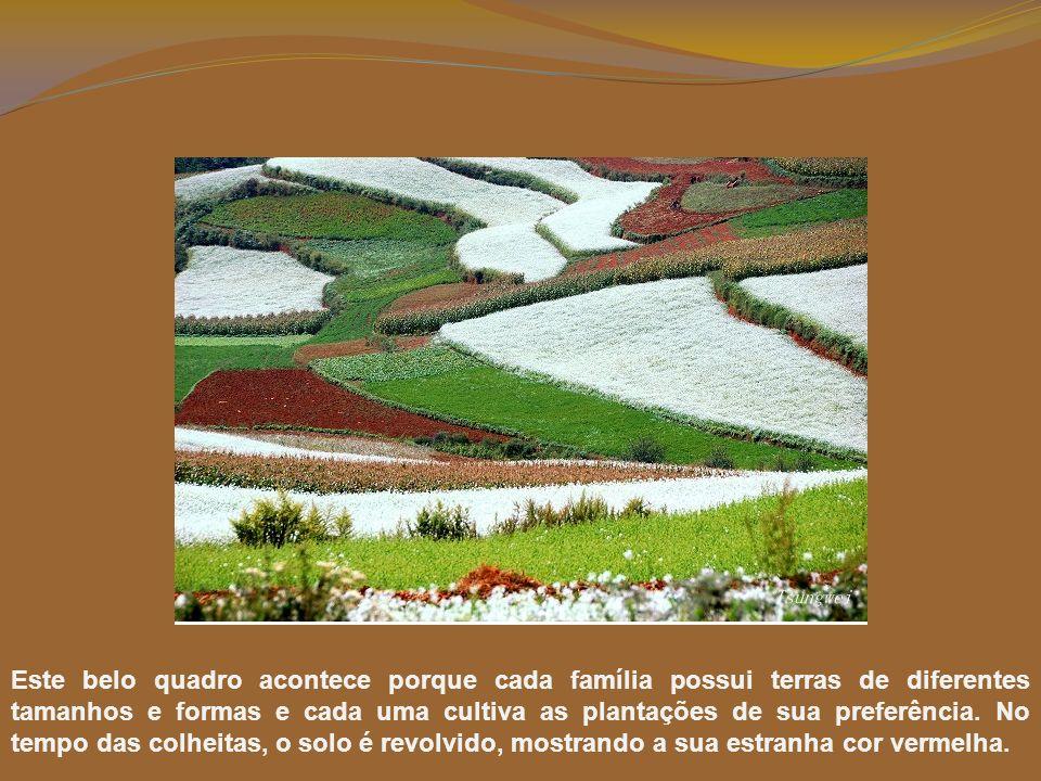 Na Red Land cultivam-se batatas, aveia, milho, plantas para óleo vegetal. Vistas de longe, estas plantações de cores variadas, parecem um tecido deslu