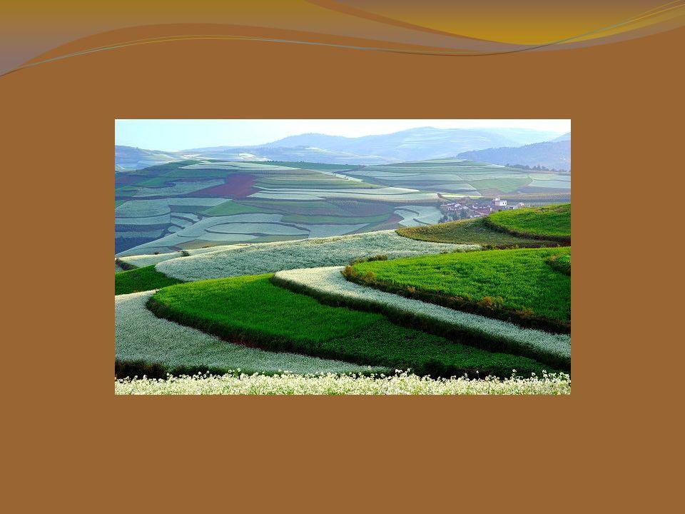 Este belo quadro acontece porque cada família possui terras de diferentes tamanhos e formas e cada uma cultiva as plantações de sua preferência.