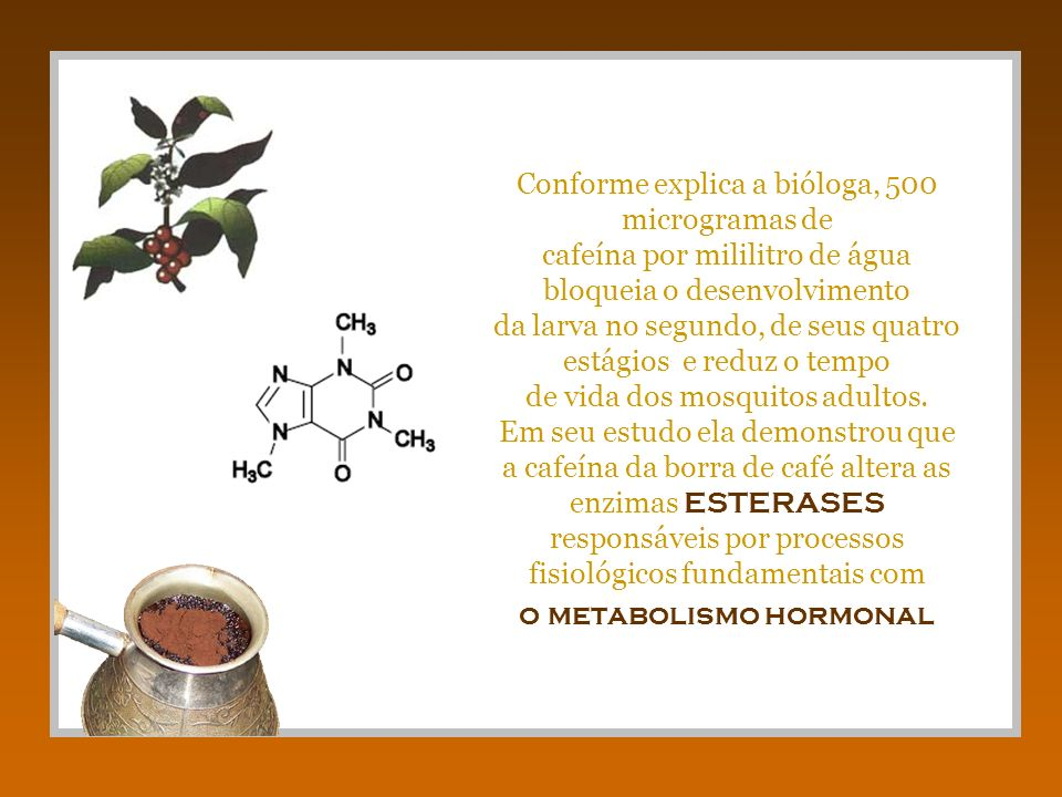 Conforme explica a bióloga, 500 microgramas de cafeína por mililitro de água bloqueia o desenvolvimento da larva no segundo, de seus quatro estágios e