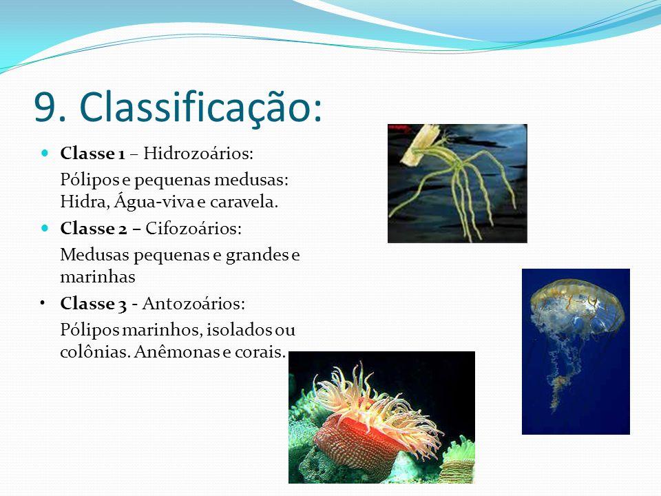 9. Classificação: Classe 1 – Hidrozoários: Pólipos e pequenas medusas: Hidra, Água-viva e caravela. Classe 2 – Cifozoários: Medusas pequenas e grandes