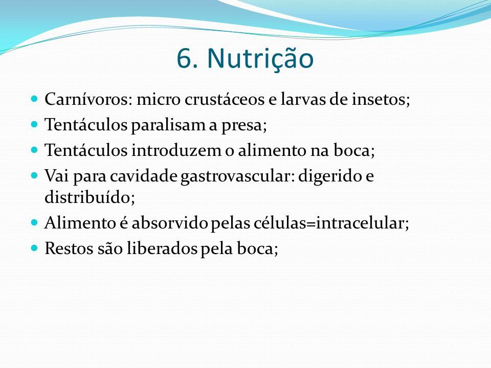 6. Nutrição Carnívoros: micro crustáceos e larvas de insetos; Tentáculos paralisam a presa; Tentáculos introduzem o alimento na boca; Vai para cavidad