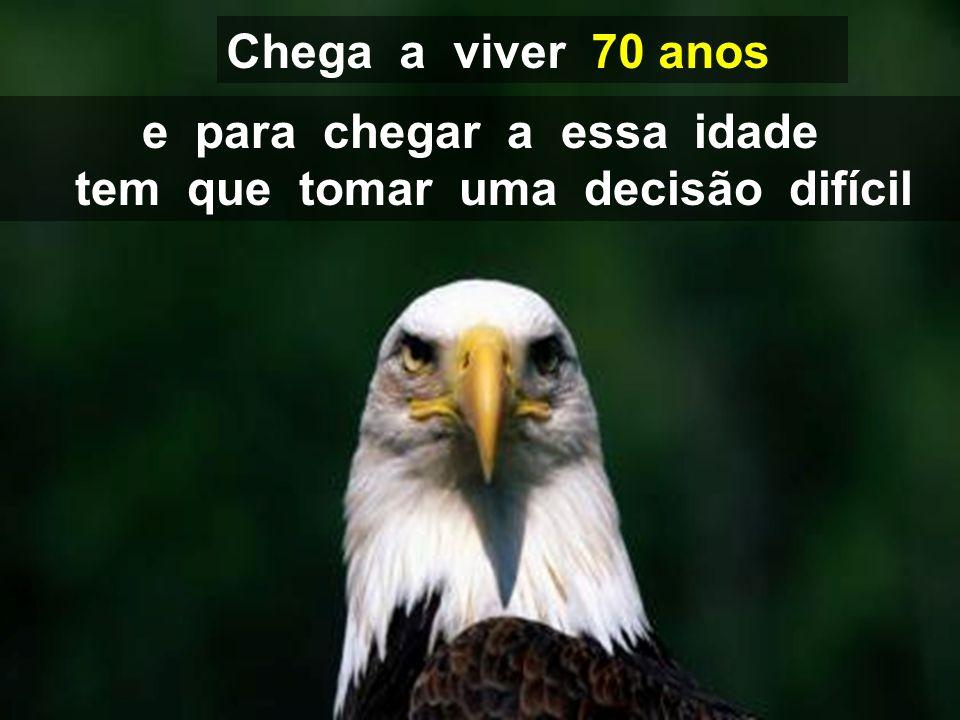 A águia tem a maior longevidade de sua espécie VOCÊ ESTA PRONTO PARA SE TRANSFORMAR EM UMA ÁGUIA????