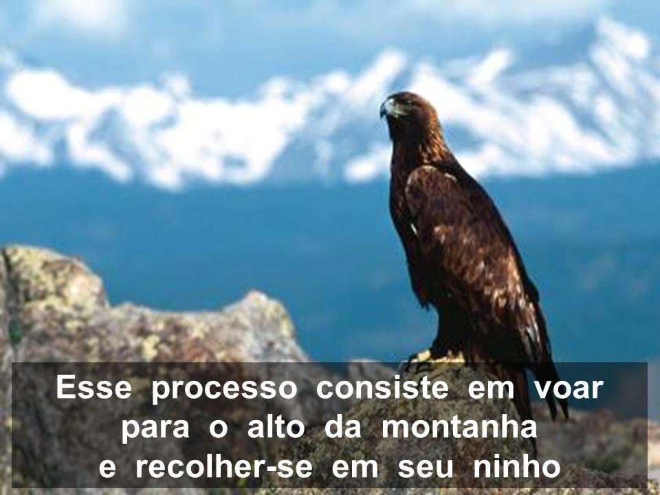 Então, a águia só tem duas alternativas: morrer ou enfrentar um processo doloroso de renovação que durará 150 dias