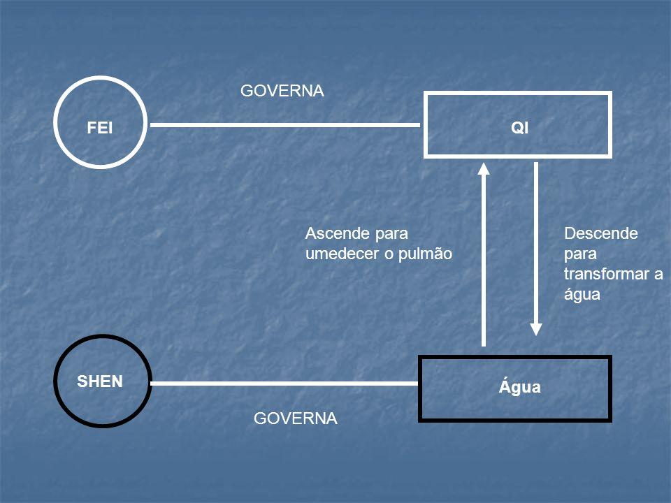 FEI SHEN QI Água GOVERNA Ascende para umedecer o pulmão Descende para transformar a água