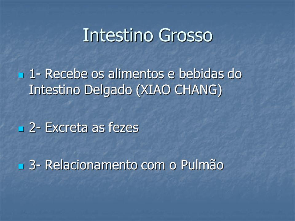Intestino Grosso 1- Recebe os alimentos e bebidas do Intestino Delgado (XIAO CHANG) 1- Recebe os alimentos e bebidas do Intestino Delgado (XIAO CHANG)