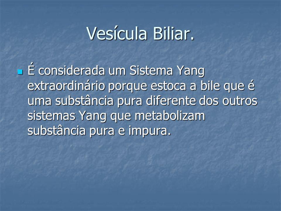 Vesícula Biliar. É considerada um Sistema Yang extraordinário porque estoca a bile que é uma substância pura diferente dos outros sistemas Yang que me