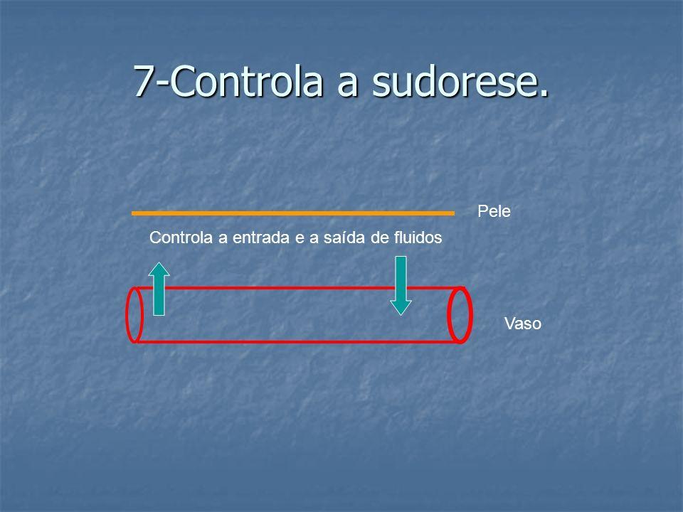 7-Controla a sudorese. Pele Vaso Controla a entrada e a saída de fluidos
