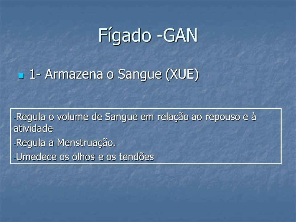 Fígado -GAN 1- Armazena o Sangue (XUE) 1- Armazena o Sangue (XUE) - Regula o volume de Sangue em relação ao repouso e à atividade - Regula a Menstruaç