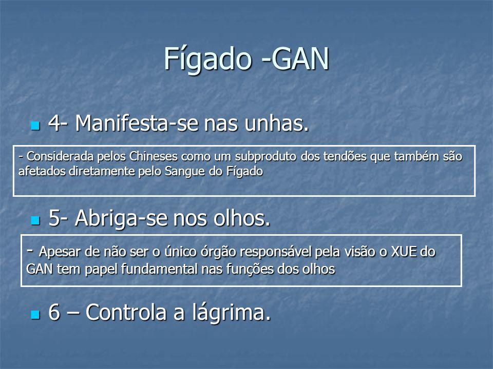 Fígado -GAN 4- Manifesta-se nas unhas. 4- Manifesta-se nas unhas. 5- Abriga-se nos olhos. 5- Abriga-se nos olhos. 6 – Controla a lágrima. 6 – Controla