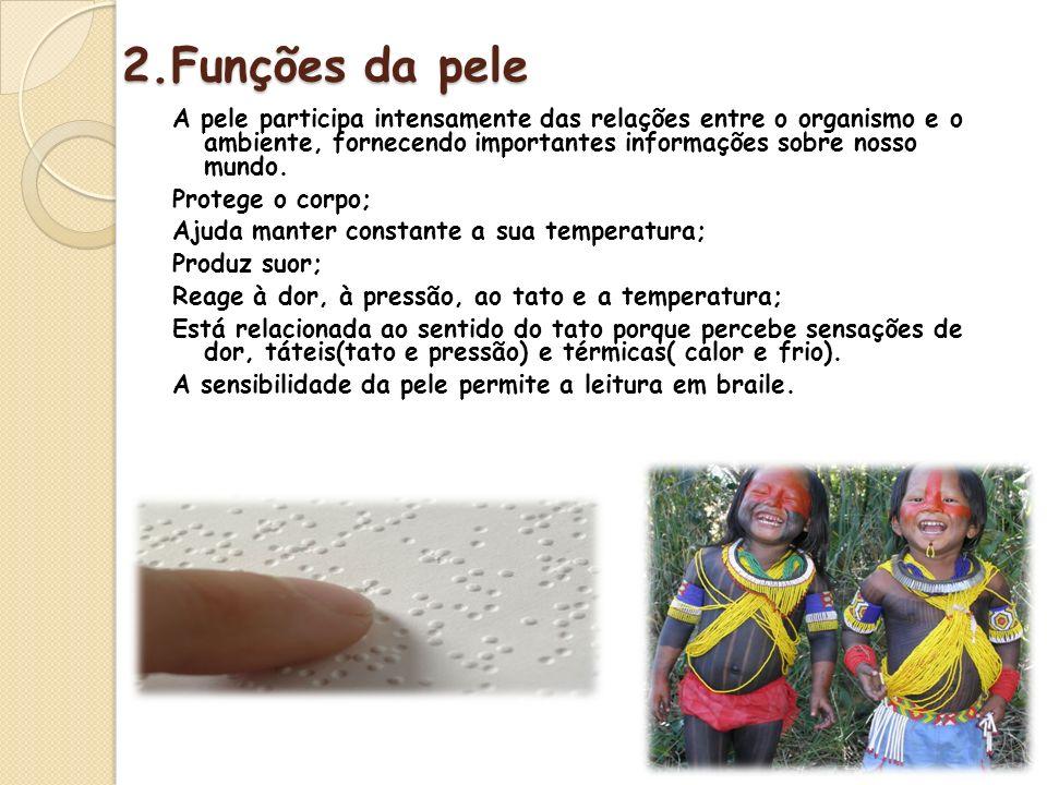 2.Funções da pele A pele participa intensamente das relações entre o organismo e o ambiente, fornecendo importantes informações sobre nosso mundo. Pro