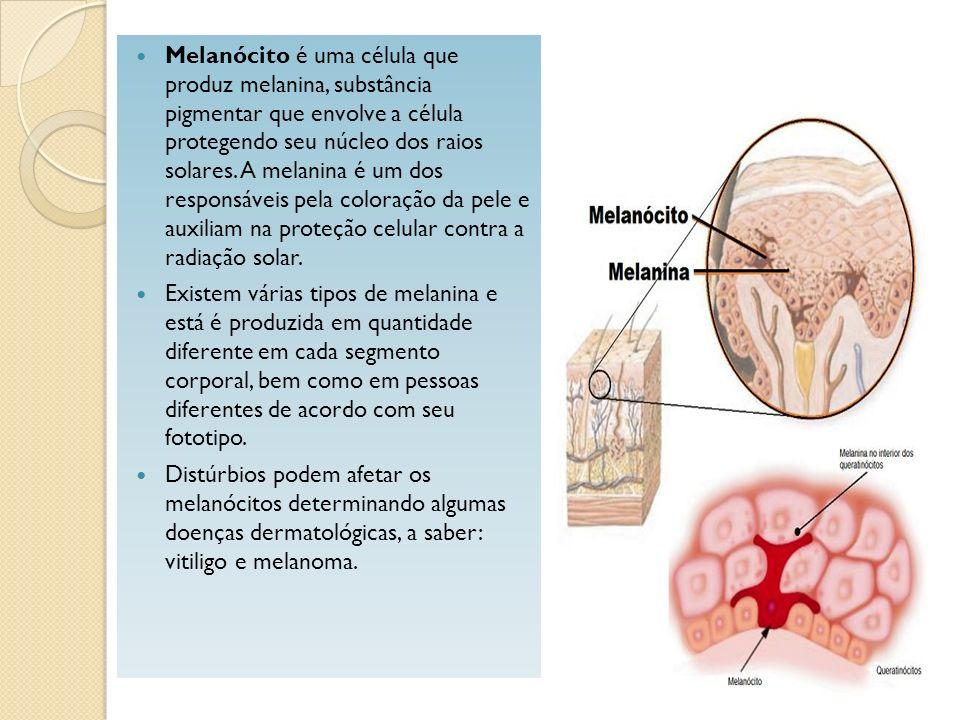 Melanócito é uma célula que produz melanina, substância pigmentar que envolve a célula protegendo seu núcleo dos raios solares. A melanina é um dos re