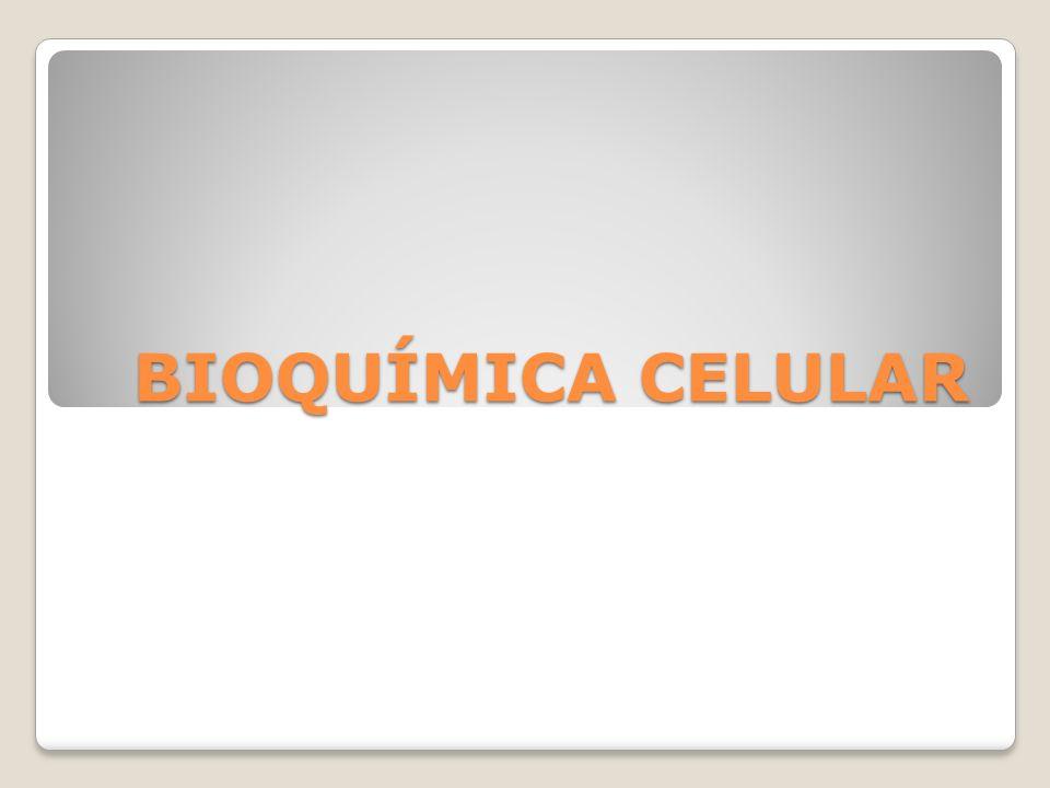 LIPÍDIOS Os lipídios são compostos com estrutura molecular variada, apresentando diversas funções orgânicas: reserva energética (fonte de energia para os animais hibernantes), isolante térmico (mamíferos), além de colaborar na composição da membrana plasmática das células (os fosfolipídios).