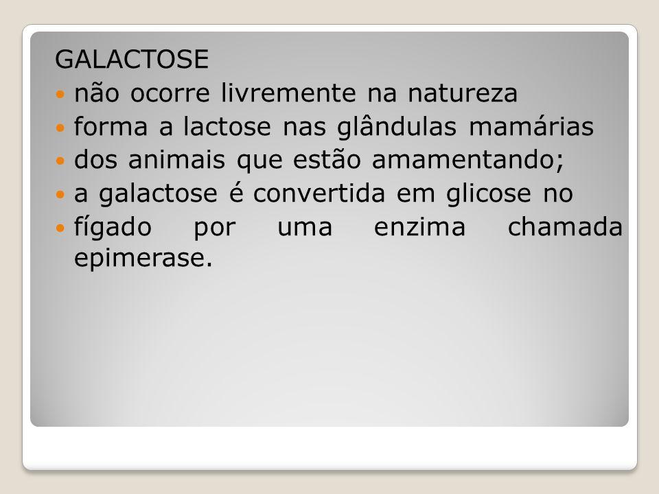 GALACTOSE não ocorre livremente na natureza forma a lactose nas glândulas mamárias dos animais que estão amamentando; a galactose é convertida em glicose no fígado por uma enzima chamada epimerase.