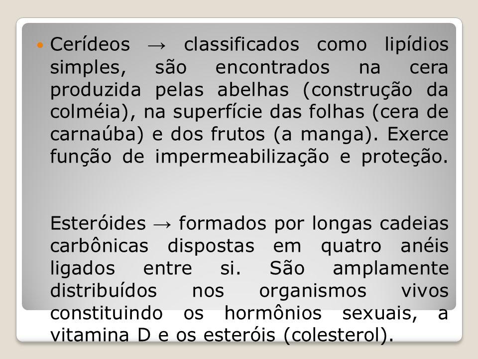 Cerídeos classificados como lipídios simples, são encontrados na cera produzida pelas abelhas (construção da colméia), na superfície das folhas (cera de carnaúba) e dos frutos (a manga).