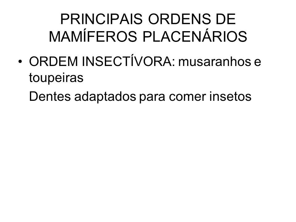 PRINCIPAIS ORDENS DE MAMÍFEROS PLACENÁRIOS ORDEM INSECTÍVORA: musaranhos e toupeiras Dentes adaptados para comer insetos
