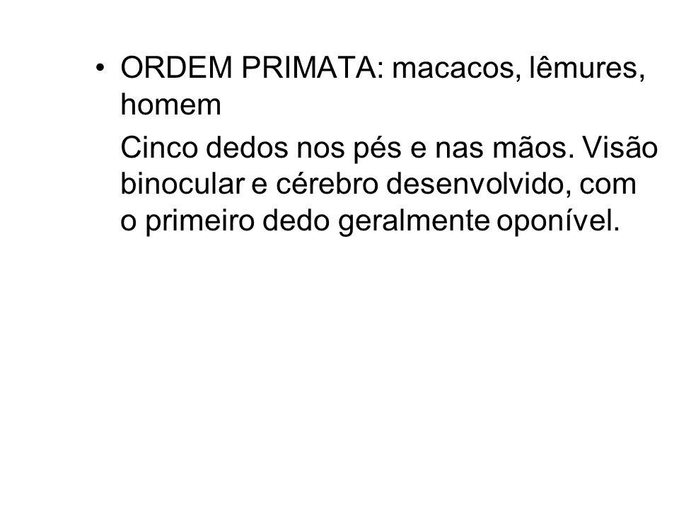 ORDEM PRIMATA: macacos, lêmures, homem Cinco dedos nos pés e nas mãos. Visão binocular e cérebro desenvolvido, com o primeiro dedo geralmente oponível