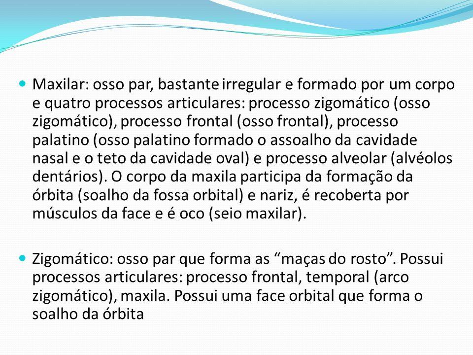 Maxilar: osso par, bastante irregular e formado por um corpo e quatro processos articulares: processo zigomático (osso zigomático), processo frontal (