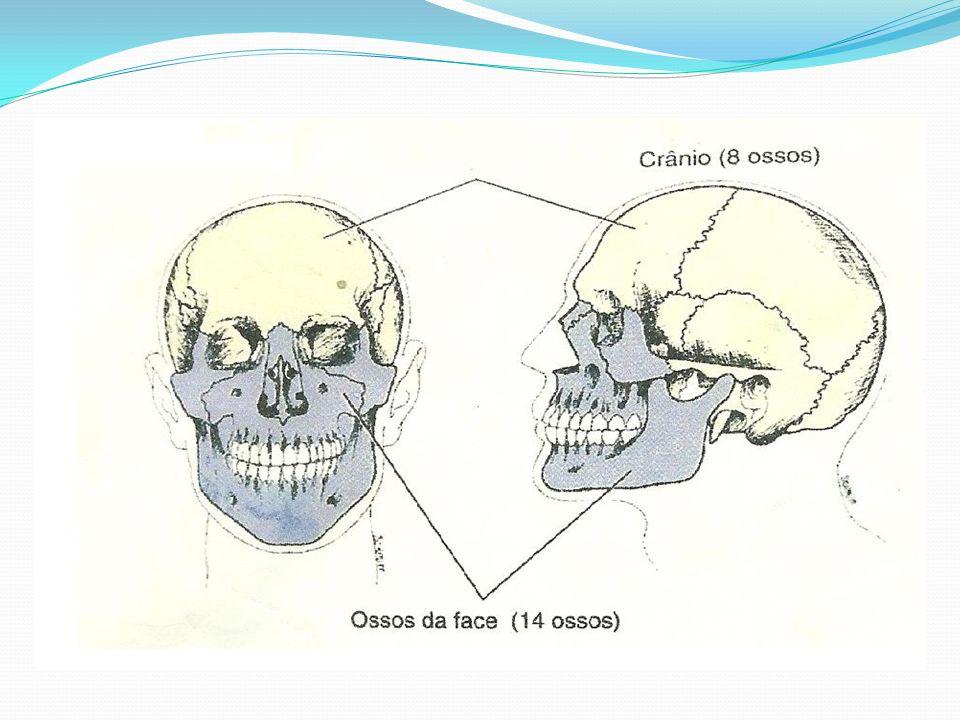 Osso frontal, observado de frente, é o mais visível.