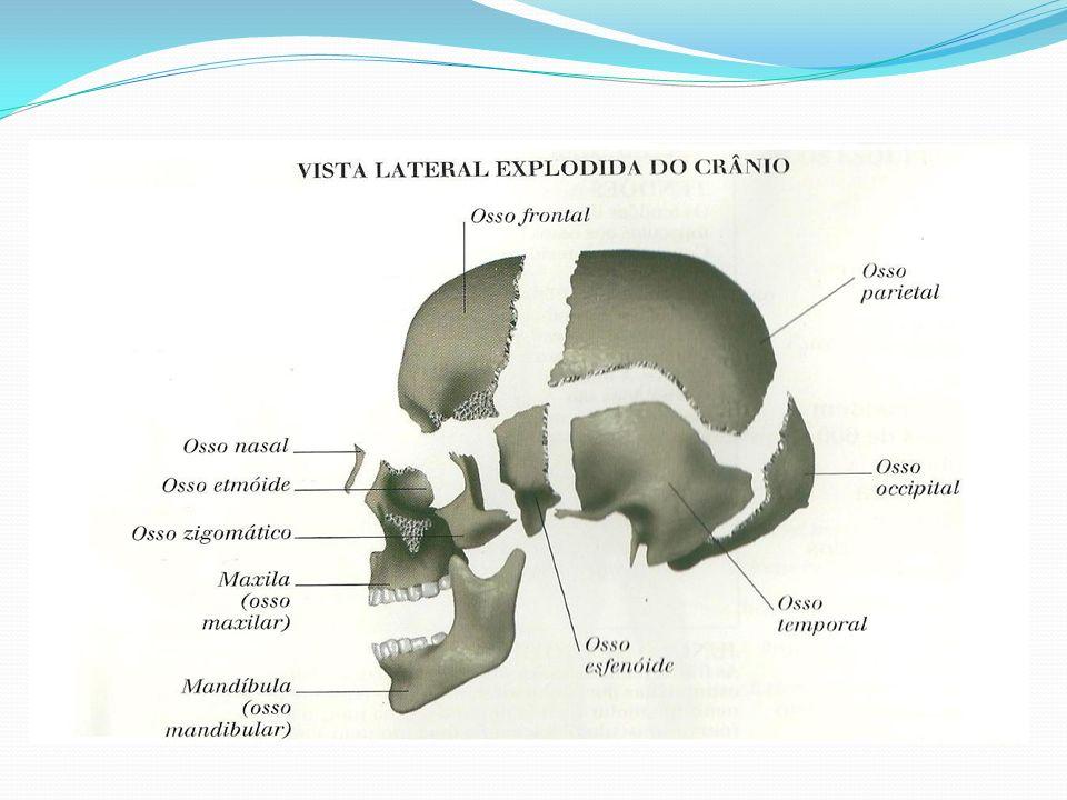 ANATOMIA RADIOGRÁFICA DA FACE A face é constituída por 14 ossos, sendo 2 ossos ímpares (mandíbula e vômer) e 6 pares (maxilar, zigomático, palatino, lacrimal, concha nasal inferior e nasal).