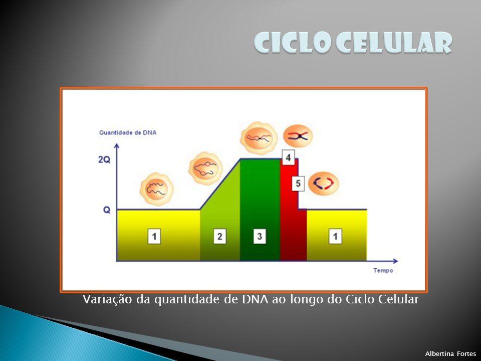 Variação da quantidade de DNA ao longo do Ciclo Celular Albertina Fortes