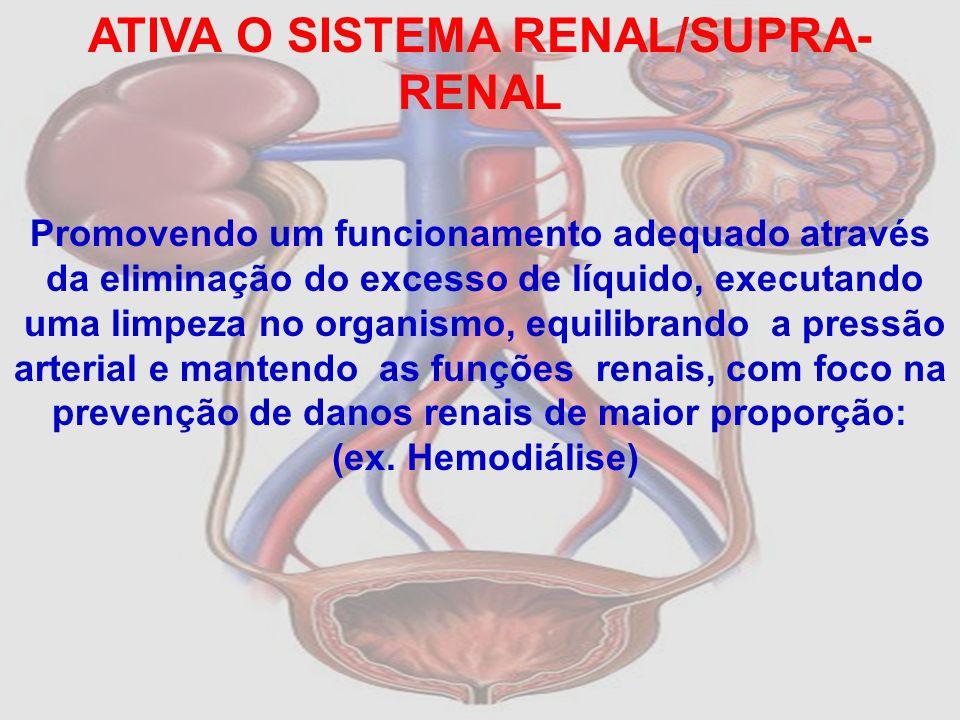 ATIVA O SISTEMA RENAL/SUPRA- RENAL Promovendo um funcionamento adequado através da eliminação do excesso de líquido, executando uma limpeza no organis
