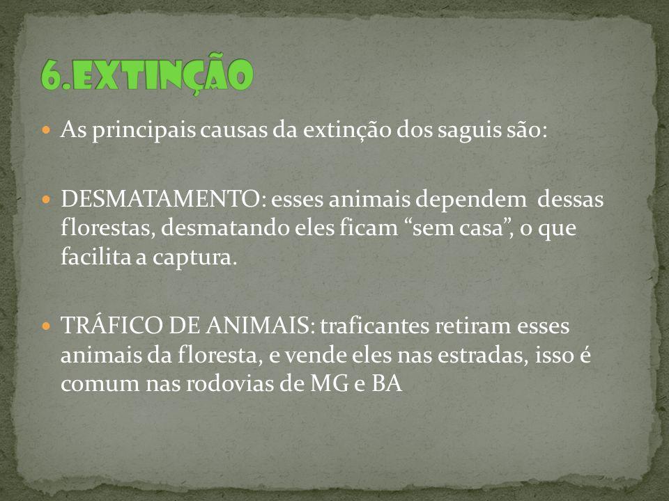 As principais causas da extinção dos saguis são: DESMATAMENTO: esses animais dependem dessas florestas, desmatando eles ficam sem casa, o que facilita
