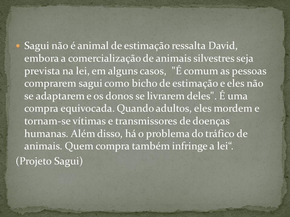 Sagui não é animal de estimação ressalta David, embora a comercialização de animais silvestres seja prevista na lei, em alguns casos,