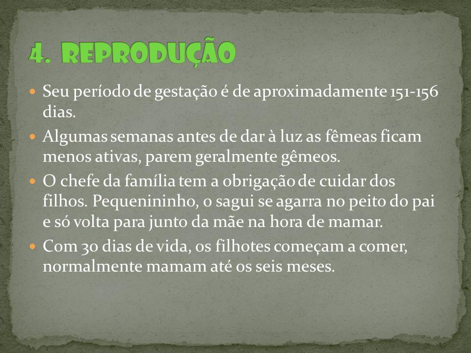 http://www.saudeanimal.com.br/primatas.htm http://www.projetosagui.com.br/index.html http://www.ilhagrande.org/Micos http://www.amazonzoo.com.br/mamiferos_saguis.sht m http://www.amazonzoo.com.br/mamiferos_saguis.sht m