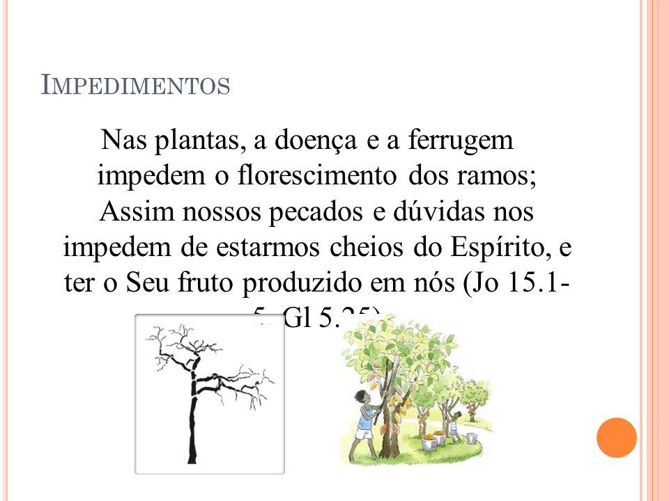 I MPEDIMENTOS Nas plantas, a doença e a ferrugem impedem o florescimento dos ramos; Assim nossos pecados e dúvidas nos impedem de estarmos cheios do Espírito, e ter o Seu fruto produzido em nós (Jo 15.1- 5, Gl 5.25)