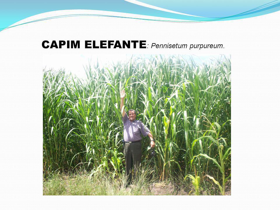 FAZENDO AS CONTAS: Nós precisaremos de 14 milhões de hectares de terras, segundo as projeções que são bastante arrojadas..