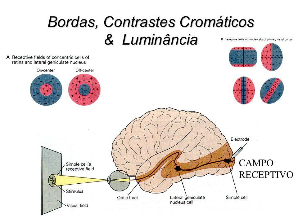 CAMPO RECEPTIVO Bordas, Contrastes Cromáticos & Luminância