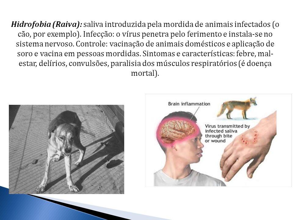 Hidrofobia (Raiva): saliva introduzida pela mordida de animais infectados (o cão, por exemplo). Infecção: o vírus penetra pelo ferimento e instala-se